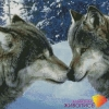 "Картина стразами ""Волчий поцелуй"""